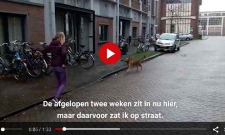 Speelse Gadget is de eerste hond in een daklozenvang: 'Iedereen is gek op hem'