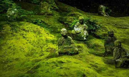 Geëngageerd boeddhisme