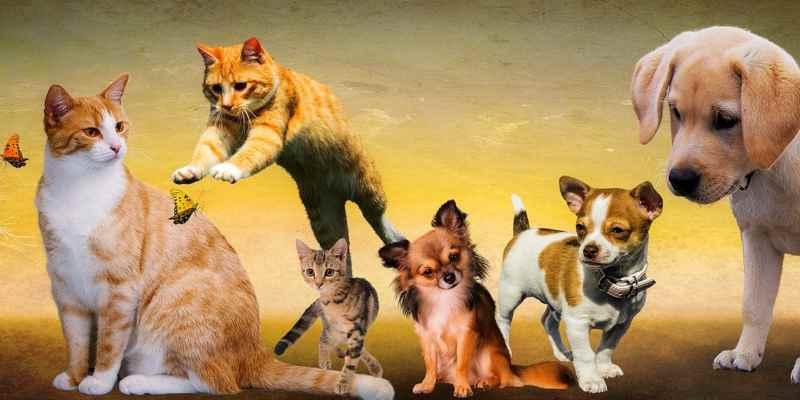 Patricia is klant bij de dierenvoedselbank 'Voor minima zijn dieren het enige wat ze nog hebben'