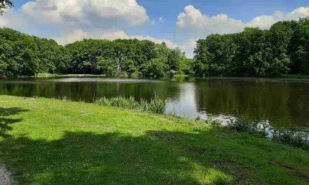 Dakloze mag in Twente zijn tent opslaan in het bos